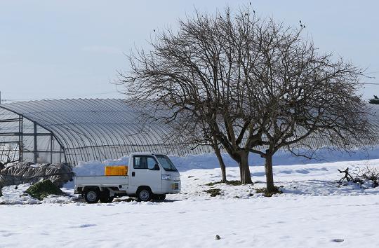 雪が積もったビニールハウスと駐車している軽トラック